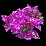 Garden flower from Orchid Villas