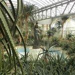 Aloe greenhouse