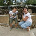 lovely, friendly donkey