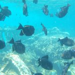 snorkeling off rays boat
