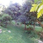 Nice hangout under the mango trees