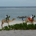 Camel rides on the beach