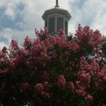 steeple over the crepe myrtle
