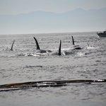 Orca-Gruppe