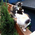 Gatos visitantes