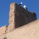 The storks on the old palace walls