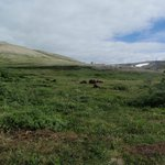 White Alice from a distance with Muskoxen in foreground.