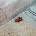 infested living room