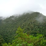 primary cloud forest