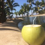 Fresh coconut water from poolside trees!