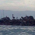 Aves en su habitat.