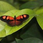 Butterflies everywhere...