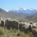 Mustering with a view