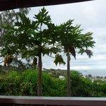 Vue sur le lagon du balcon du studio