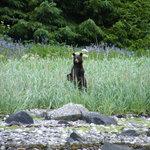Black Bear. Photo: BJ Robinson
