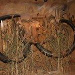 woolly mammoth tusks