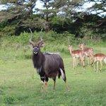 Wildlife at Emdoneni