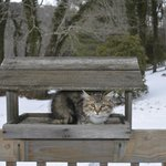 Bird Feeder - With Cat