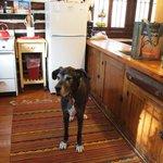 Kitchen in the Sunshine cabin
