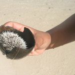 Sea urchins all over