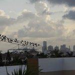 Vue de la piscine sur les bâtiments de Miami