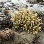 Coral Garden1