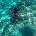 Great Sea Reef