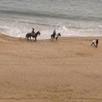 Enjoying the view and horses along the beach from balcony