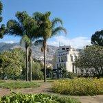 argentinian-brazilian queen palms,view Avenida Arriaga