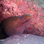 One of the local Moray Eels we saw.