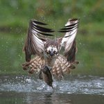 Fully guided Wildlife photography in Aviemore