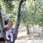 Una oliva gigante