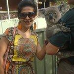 cute koala...