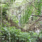 The rainforest exhibit