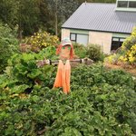 Lucy's scarecrow.