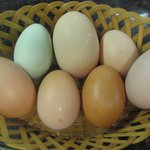 Fresh and gorgeous eggs from our own backyard hens...yum!