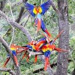 Macaw's