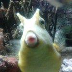 photogenic fish!