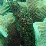 Photo de Buena Ventura Diving