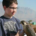 Teen handling falcon