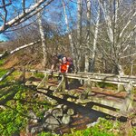 There are several beautiful creek crossing with these lovely bridges on the Coast Trail