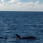 Dophin pod met while SUPg xmas day
