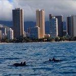 Dolphin pod Xmas day- literally 500m from hotel