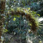 Bromeliads everywhere