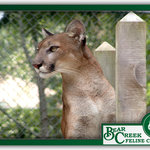 Bear Creek Feline Center