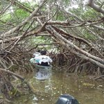 Deeper Into the Mangroves