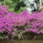 Beautiful garden flowers