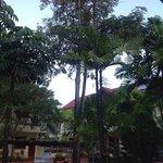 club coconut