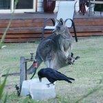 Wildlife on motel grounds