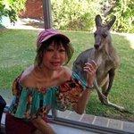 The resident kangaroo says hello at breakfast-time